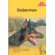 Doberman Kupno, żywienie, pielęgnacja, charakter, zdrowie, rozmnażanie i wiele więcej...